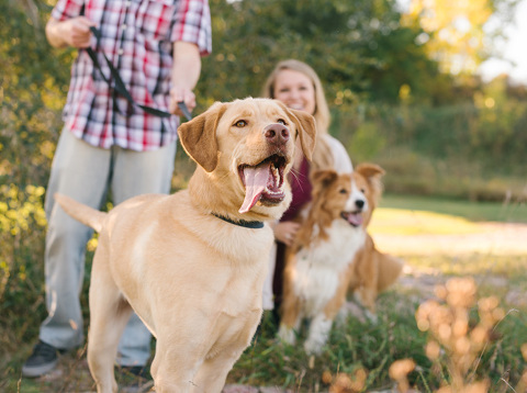Lifestyle portrait session with dogs in state park